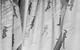 "Спектакль: <b><i>Белоснежка исемь гномов</i></b><br /><span class=""normal"">Понедельник— Артём Волобуев<br />Вторник— Николай Сальников<br />Воскресенье— Виктор Хориняк<br />Пятница— Армен Арушанян<br />Четверг— Георгий Ковалёв<br />Суббота— Алексей Краснёнков<br /><i></i><br /><span class=""small"">© Екатерина Цветкова</span></span>"
