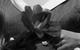 """Спектакль: <b><i>Белоснежка исемь гномов</i></b><br /><span class=""""normal"""">Воскресенье— Виктор Хориняк<br />Белоснежка— Нина Гусева<br />Пятница— Армэн Арушанян<br />Понедельник— Артём Волобуев<br /><i></i><br /><span class=""""small"""">© Екатерина Цветкова</span></span>"""