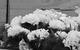 "Спектакль: <b><i>Лес</i></b><br /><span class=""normal"">Бодаева— Раиса Максимова<br />Гурмыжская— Наталья Тенякова<br />Милонова— Галина Киндинова<br /><i></i><br /><span class=""small"">© Екатерина Цветкова</span></span>"