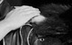 "Спектакль: <b><i>Мастер иМаргарита</i></b><br /><span class=""normal"">Азазелло— Игнатий Акрачков<br />Воланд— Дмитрий Назаров<br /><i></i><br /><span class=""small"">© Екатерина Цветкова</span></span>"