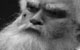 """Спектакль: <b><i>Скрипка инемножко нервно</i></b><br /><span class=""""normal"""">Морфинист и Могильщик— Роман Кириллов<br /><i></i><br /><span class=""""small"""">© Олег Черноус</span></span>"""