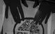 """Спектакль: <b><i>Загадочное ночное убийство собаки</i></b><br /><span class=""""normal""""><br /><i></i><br /><span class=""""small"""">© Екатерина Цветкова</span></span>"""