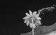 "Спектакль: <b><i>Конёк-Горбунок</i></b><br /><span class=""normal"">Кирилл Трубецкой<br />Надежда Жарычева<br />Ирина Пегова<br />Сергей Беляев<br /><i></i><br /><span class=""small"">© Екатерина Цветкова</span></span>"
