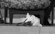 "Спектакль: <b><i>Лес</i></b><br /><span class=""normal"">Бодаева— Раиса Максимова<br />Улита— Евгения Добровольская<br />Гурмыжская— Наталья Тенякова<br />Милонова— Галина Киндинова<br />Буланов— Александр Молочников<br /><i></i><br /><span class=""small"">© Екатерина Цветкова</span></span>"