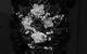 """Спектакль: <b><i>Луизиана</i></b><br /><span class=""""normal"""">Маринина— Евгения Добровольская<br />Тимур— Сергей Сосновский<br />Георгий Ковалёв<br /><i></i><br /><span class=""""small"""">© Екатерина Цветкова</span></span>"""