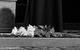 """Спектакль: <b><i>Мушкетёры. Сага. Часть первая</i></b><br /><span class=""""normal"""">Атос— Игорь Миркурбанов<br />Миледи— Марина Зудина<br /><i></i><br /><span class=""""small"""">© Екатерина Цветкова</span></span>"""