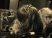 "Спектакль: <b><i>История про Ваксу для любящих родителей илюбимых детей</i></b><br /><span class=""normal"">Маша Левитина<br /><i>Репетиция</i><br /><span class=""small"">© Дмитрий Хованский</span></span>"