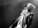 "Спектакль: <b><i>Старик Хоттабыч</i></b><br />Спектакль: <b><i>Старик Хоттабыч иНовогоднее чудо</i></b><br /><span class=""normal"">Хоттабыч— Петр Кудряшов<br /><i>Репетиция</i><br /><span class=""small"">© Дмитрий Хованский</span></span>"