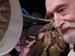 "Спектакль: <b><i>С.С.С.Р.</i></b><br /><span class=""normal"">Соавтор №1— Борис Романов<br /><i></i><br /><span class=""small"">© Михаил Белоцерковский</span></span>"