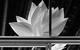 "Спектакль: <b><i>Dreamworks* *Мечтасбывается</i></b><br /><span class=""normal"">Фрэнк— Виталий Кищенко<br />Бэтти— Паулина Андреева<br /><i></i><br /><span class=""small"">© Екатерина Цветкова</span></span>"