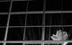 "Спектакль: <b><i>Dreamworks* *Мечтасбывается</i></b><br /><span class=""normal""><br /><i></i><br /><span class=""small"">© Екатерина Цветкова</span></span>"