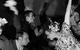 """Спектакль: <b><i>Гордость ипредубеждение</i></b><br /><span class=""""normal"""">Сэр Уильям Лукас— Николай Сальников<br />Шарлота Лукас— Инесса Чиркина<br />Гость на балу, офицер, лакей— Григорий Трапезников<br /><i></i><br /><span class=""""small"""">© Екатерина Цветкова</span></span>"""