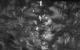 """Спектакль: <b><i>В.Ж.</i></b><br /><span class=""""normal"""">Павел— Игорь Хрипунов<br />Анна— Лариса Кокоева<br />Людмила— Ксения Теплова<br />Наталья— Яна Дюбуи<br />Прохор— Владимир Тимофеев<br /><i></i><br /><span class=""""small"""">© Екатерина Цветкова</span></span>"""