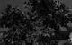 "Спектакль: <b><i>Правда— хорошо, асчастье лучше</i></b><br /><span class=""normal"">Никандр Мухояров— Владимир Тимофеев<br />Поликсена— Анастасия Скорик<br />Платон— Максим Блинов<br />Мавра Тарасовна— Ольга Яковлева<br /><i></i><br /><span class=""small"">© Екатерина Цветкова</span></span>"