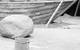"Спектакль: <b><i>Мальва</i></b><br /><span class=""normal"">актер— Андрей Кузичев<br />актриса— Светлана Устинова<br />актер— Артём Быстров<br />актер— Олег Гаас<br /><i></i><br /><span class=""small"">© Екатерина Цветкова</span></span>"
