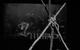 "Спектакль: <b><i>Мальва</i></b><br /><span class=""normal"">актер— Андрей Кузичев<br />актриса— Светлана Устинова<br />актер— Олег Гаас<br />актер— Артём Быстров<br /><i></i><br /><span class=""small"">© Екатерина Цветкова</span></span>"