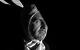 "Спектакль: <b><i>Зойкина квартира</i></b><br /><span class=""normal"">Газолин, Пеструхин— Антон Васильев<br /><i></i><br /><span class=""small"">© Екатерина Цветкова</span></span>"