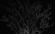 "Спектакль: <b><i>The Man ofFish</i></b><br /><span class=""normal"">Бенуа— Andrey Burkovsky<br />Лиза— Nadezhda Kaleganova<br />Салманова— Laura Pitskhelauri<br />Стасик— Pavel Vorozhtsov<br /><i></i><br /><span class=""small"">© Ekaterina Tsvetkova</span></span>"