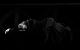 "<div class=""normal"">Тихий &mdash; Павел Ворожцов<br />Серафима Владимировна Корзухина &mdash; Мария Карпова</div><div class=""small it normal"">Фото: Александр Иванишин</div>"