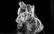 "<div class=""normal"">Прохор Пенкин &mdash; Дмитрий  Сумин <br />Пелагея Прокофьевна Пенкина, жена Пенкина; Птица, Медсестра &mdash; Ксения Теплова</div><div class=""small it normal"">Фото: Александр Иванишин</div>"